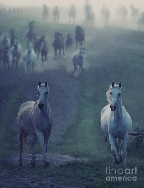 Foal Photograph - Wild Horses by Conrado