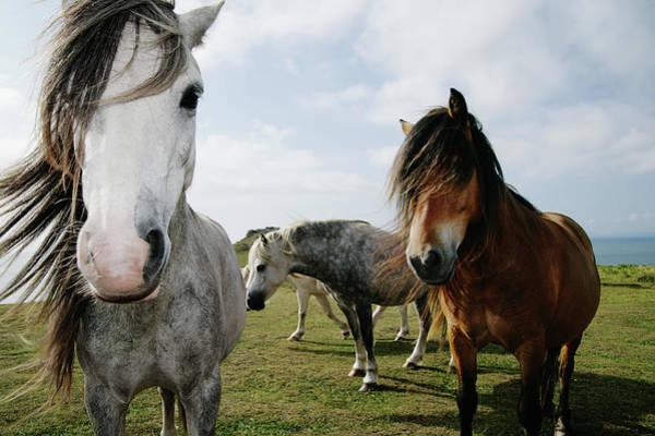 Headlands Photograph - Wild Horses Equus Caballus On Coastal by Steve Coleman