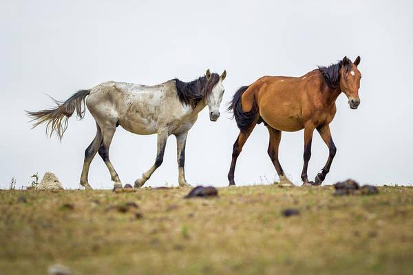 Photograph - Wild Horses Guanapalo Casanare Colombia by Adam Rainoff
