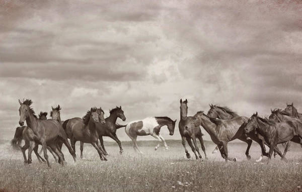Wall Art - Photograph - Wild Horses In Sepia by Debra and Dave Vanderlaan