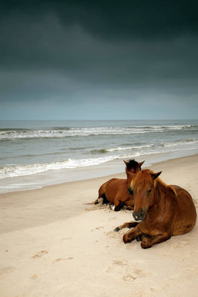 Assateague Island Photograph - Wild Horses by Photo By Edward Kreis, Dk.i Imaging