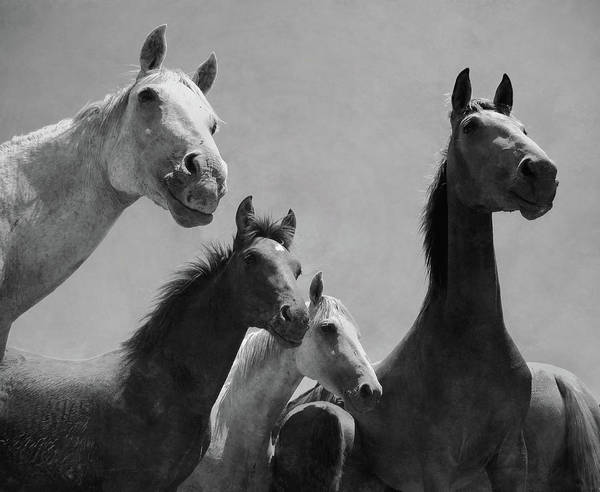 White Horse Wall Art - Photograph - Wild Horses Portrait by Antonio Arcos Aka Fotonstudio Photography