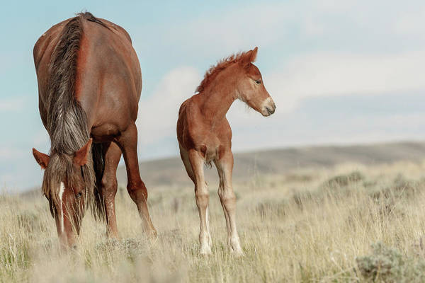 Photograph - Wild Horses by Ronnie and Frances Howard