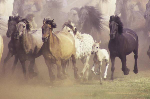 Wall Art - Photograph - Wild Horses Running by John Foxx