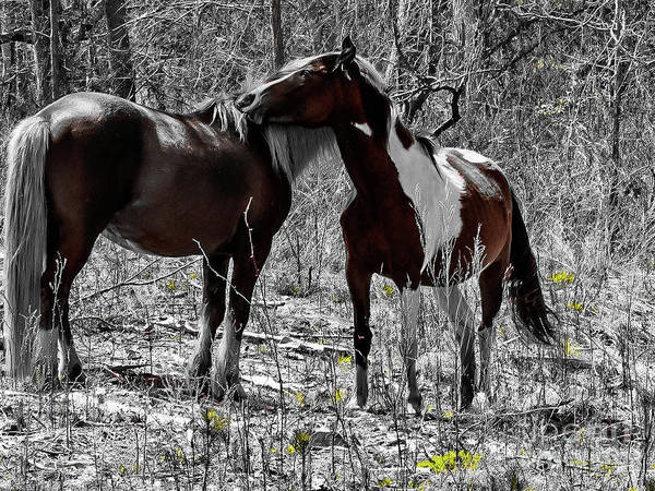 Wall Art - Photograph - Wild Horses by Sandy Webster