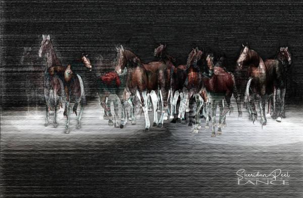 Wild Horses Under Spotlight Art Print