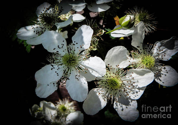 Photograph - Wild In The Woods by Judy Hall-Folde