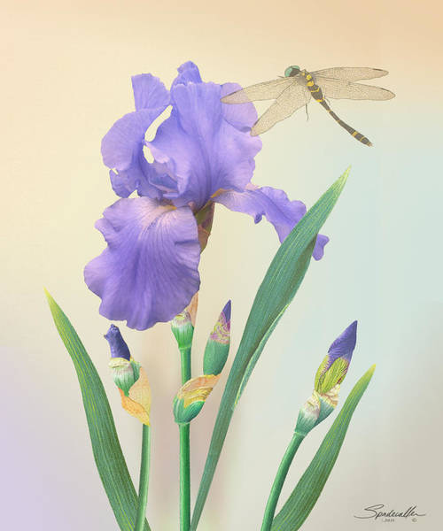 Digital Art - Wild Iris And Dragonfly by Spadecaller