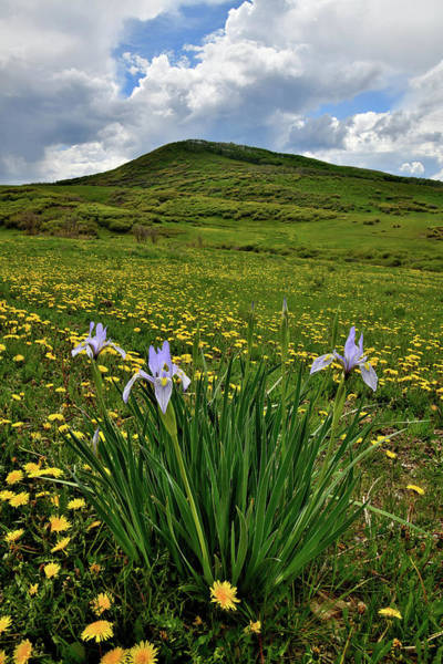 Photograph - Wild Iris Blooms Along Last Dollar Road by Ray Mathis