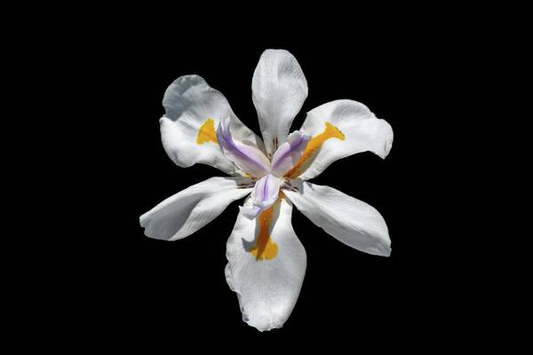 Photograph - Wild Iris On Black  by Alison Frank