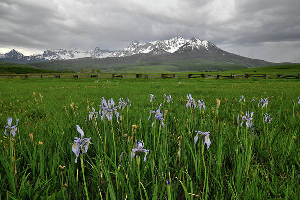 Photograph - Wild Irises Along Last Dollar Road by Ray Mathis