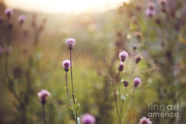 Wild Meadow Pink Flowers In Autumn Art Print