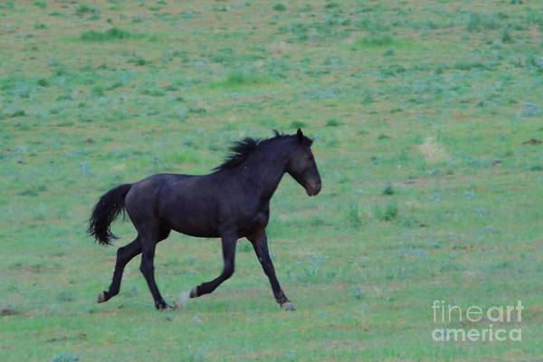 Wall Art - Photograph - Wild On The Grasslands  by Jeff Swan