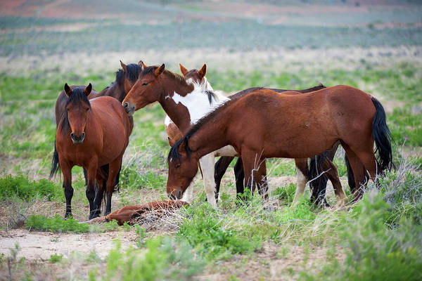 Wall Art - Photograph - Wild Or Feral Horses Populate Large by Richard Wright