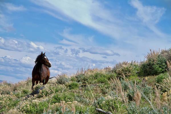 Photograph - Wild Paint Mustang Stallion by Waterdancer