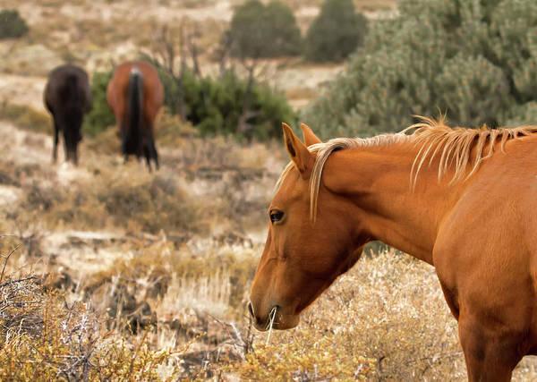 Photograph - Wild Palamino Horse by Waterdancer