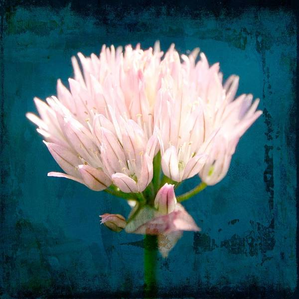 Wall Art - Mixed Media - Wild Pink Bloom by Amanda Lakey