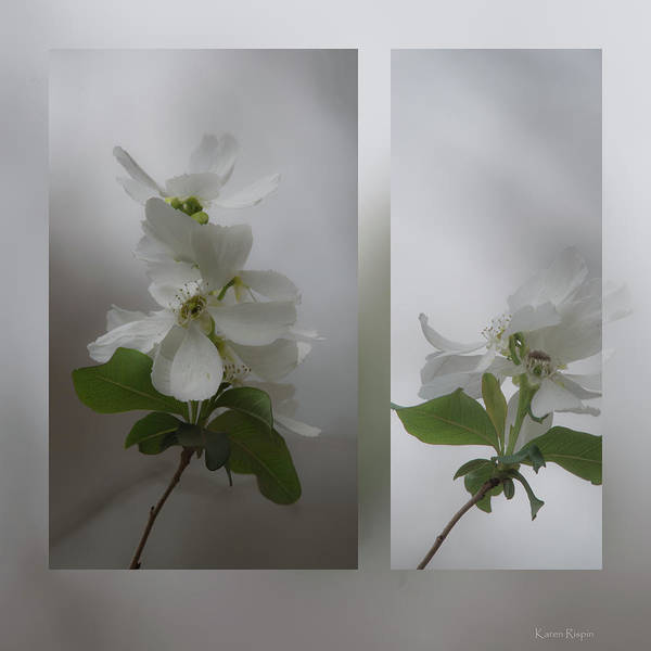 Photograph - Wild Plum by Karen Rispin