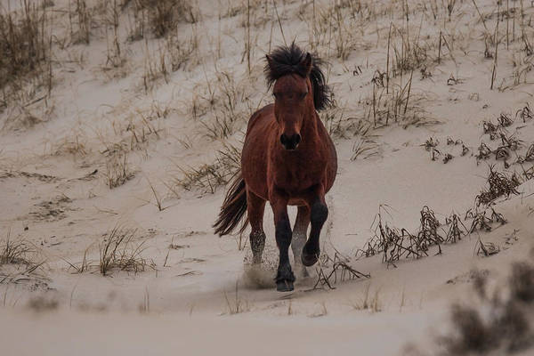 Photograph - Wild Pony by Pete Federico
