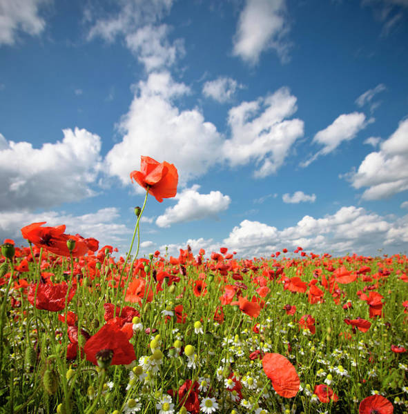 June Photograph - Wild Poppy Field by Georgeclerk