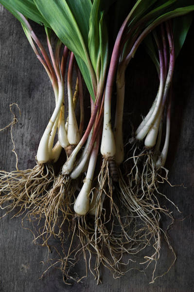 Forage Wall Art - Photograph - Wild Ramps On Farm Table by Valery Rizzo
