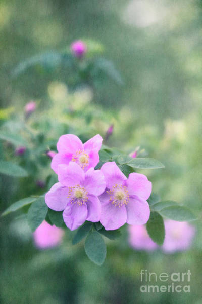 Wall Art - Photograph - Wild Roses In The Forest by Priska Wettstein