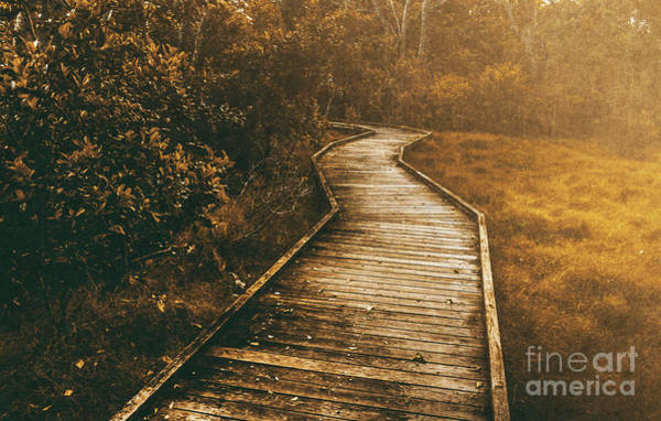 Trails Wall Art - Photograph - Wild Routes by Jorgo Photography - Wall Art Gallery