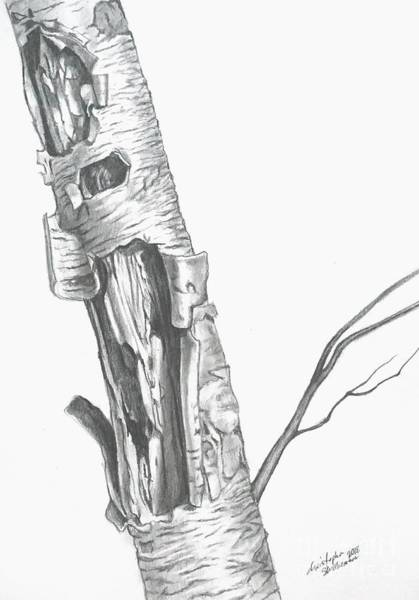 Drawing - Wild Single Birch Tree In Pencil by Christopher Shellhammer