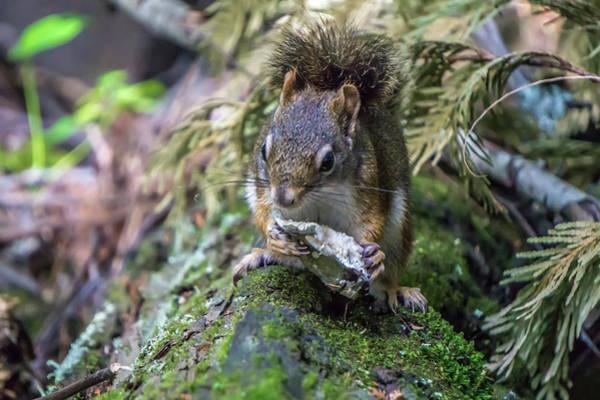 Photograph - Wild Squirrel In Kootenai River Park by Alex Grichenko