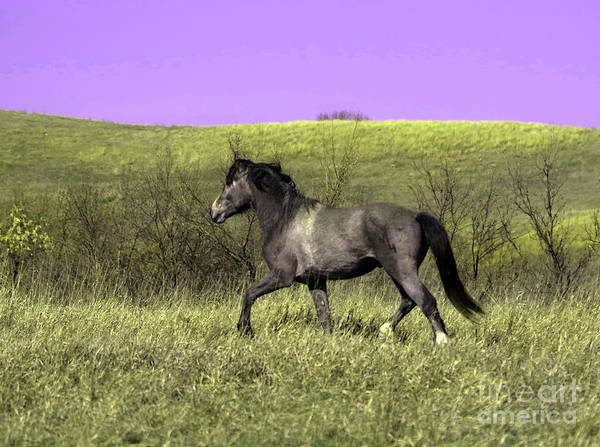Wall Art - Photograph - Wild Stallion On The Move In North Dakota by Jeff Swan