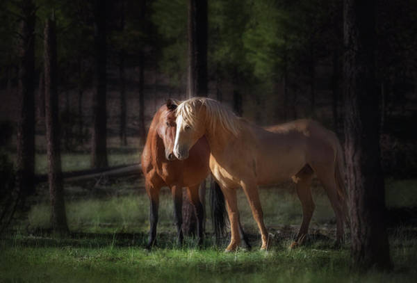 Wall Art - Photograph - Wild Stallions In The Forest by Liz Uribe