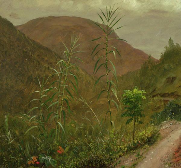 Wall Art - Painting - Wild Sugar Cane, Jamaica, 1865 by Frederic Edwin Church