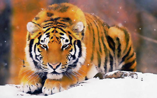 Painting - Wild Tiger - 01 by Andrea Mazzocchetti
