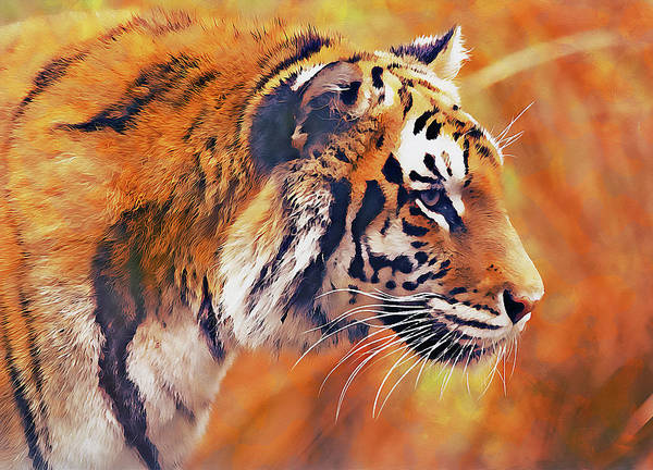 Painting - Wild Tiger - 05 by Andrea Mazzocchetti