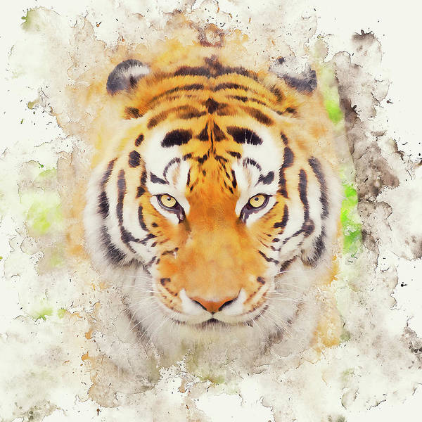Painting - Wild Tiger - 06 by Andrea Mazzocchetti