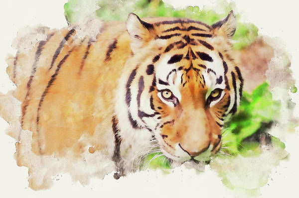 Painting - Wild Tiger - 07 by Andrea Mazzocchetti