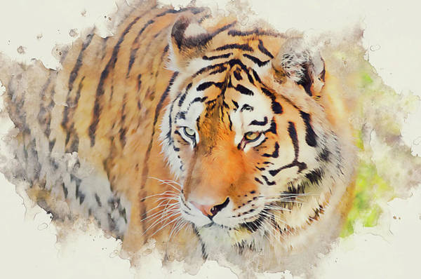Painting - Wild Tiger - 08 by Andrea Mazzocchetti