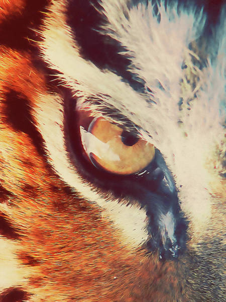 Painting - Wild Tiger - 09 by Andrea Mazzocchetti