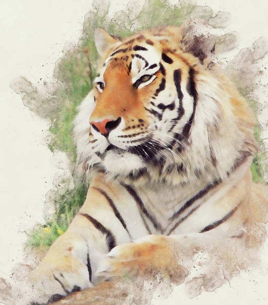 Painting - Wild Tiger - 10 by Andrea Mazzocchetti