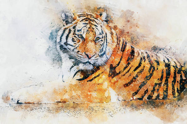 Painting - Wild Tiger - 12 by Andrea Mazzocchetti