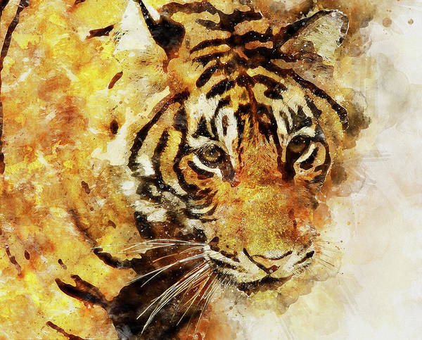 Painting - Wild Tiger - 13 by Andrea Mazzocchetti