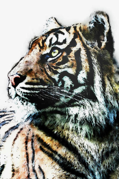 Painting - Wild Tiger - 18 by Andrea Mazzocchetti