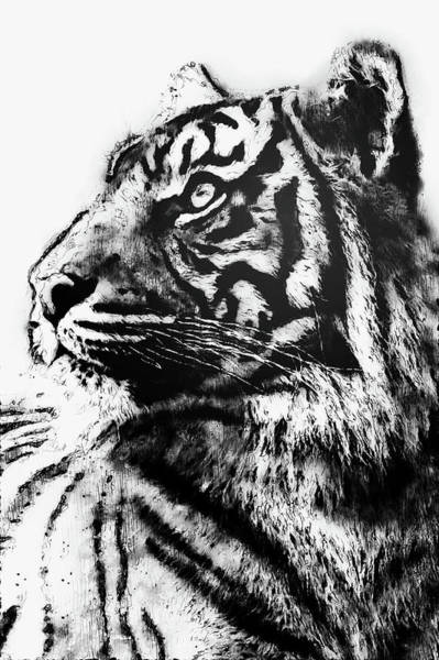 Painting - Wild Tiger - 19 by Andrea Mazzocchetti