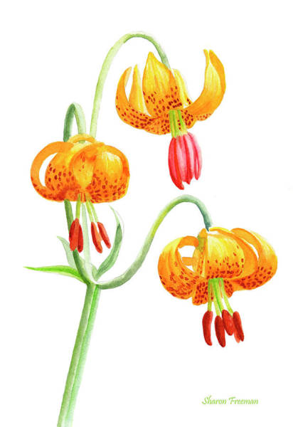 Cascade Painting - Wild Tiger Lilies by Sharon Freeman