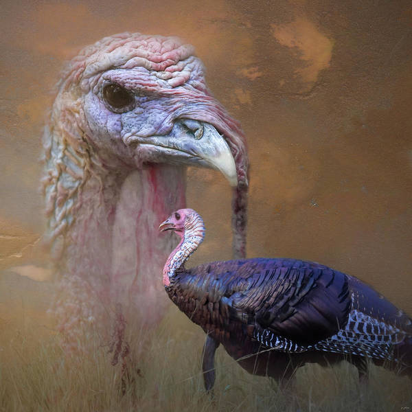 Photograph - Wild Turkey Portrait by Jai Johnson