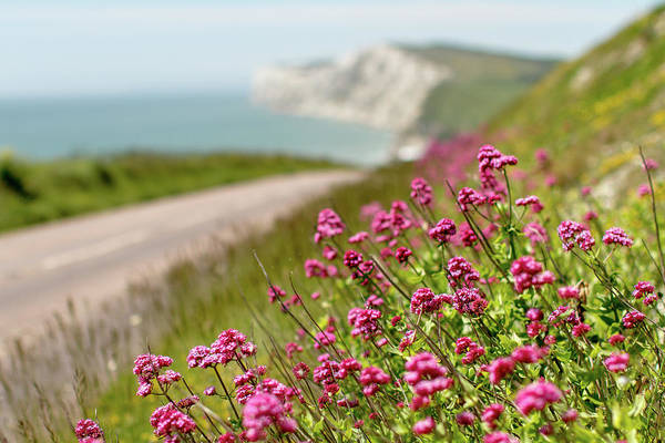 Freshwater Photograph - Wild Valerian Growing On The Road To by S0ulsurfing - Jason Swain