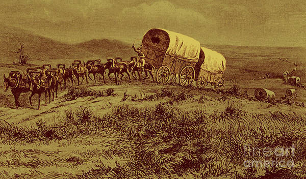 Wall Art - Drawing - Wild West  Mule Train Heading West by Bohuslav Kroupa