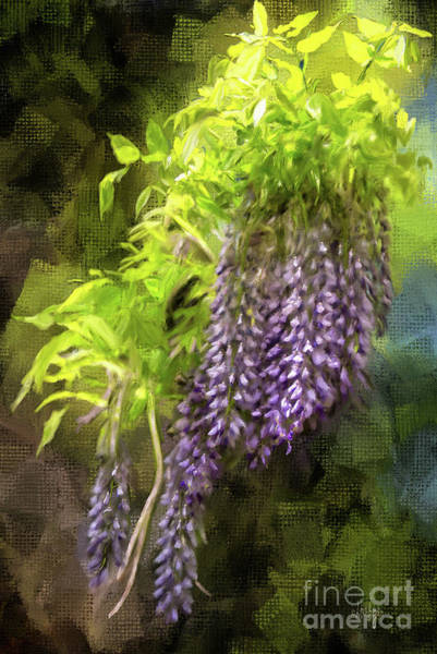 Digital Art - Wild Wisteria by Lois Bryan
