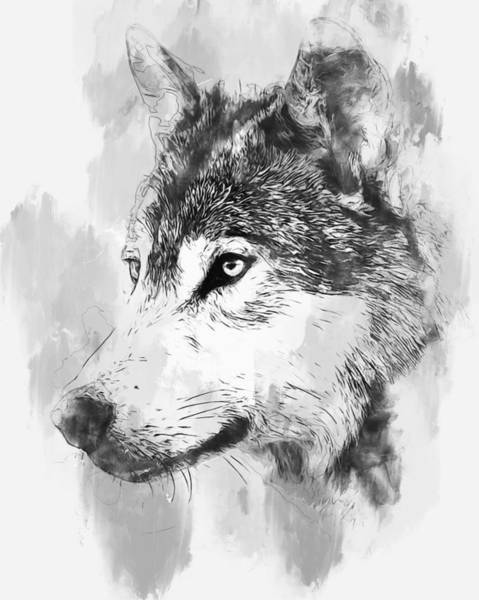Painting - Wild Wolf - 01 by Andrea Mazzocchetti