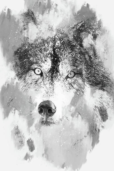 Painting - Wild Wolf - 02 by Andrea Mazzocchetti